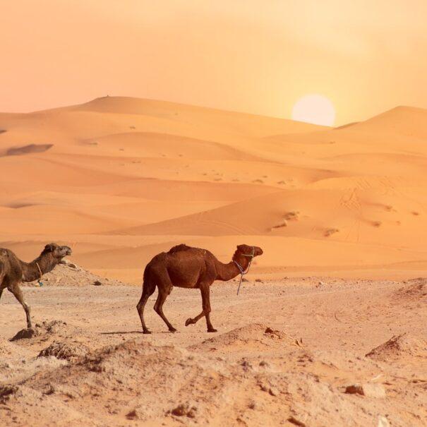 Ruta de 3 días de Ouarzazate a Merzouga