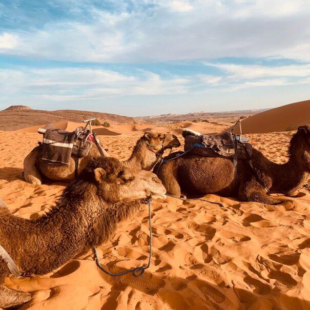 8 dias en Marruecos desde Casablanca