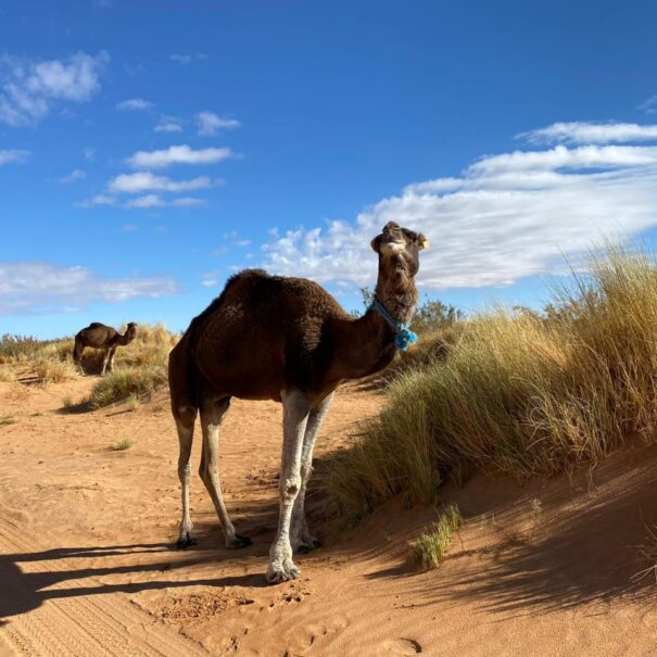 3 days desert tour from Errachidia