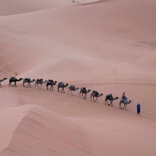 Camel trekking with the best 5 days tour in Morocco from Fes to Marrakech